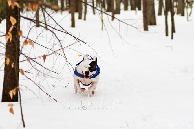 Sunday Funday: The DogEdition