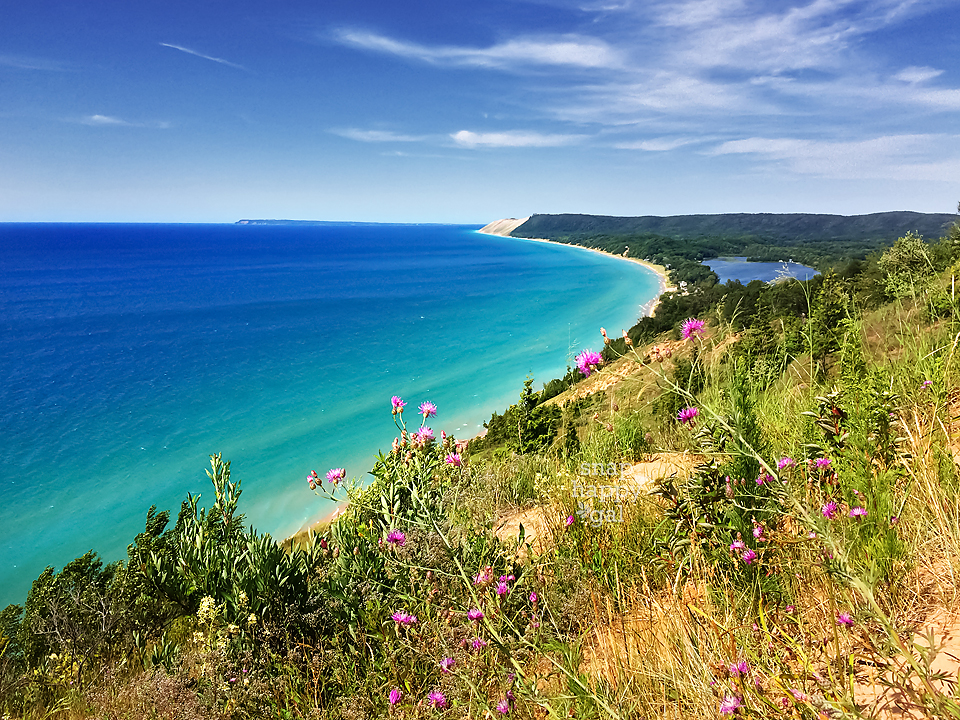 Photo: Summer flowers and bright blue skies over the Empire Bluffs over Lake Michigan