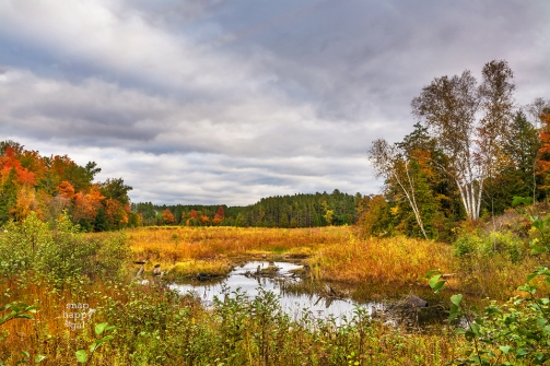 moody-fall-wetlands-sabin-pond