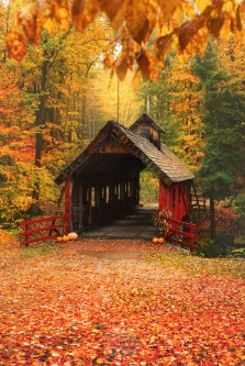 Golden fall colors surround the Loon Song/Joshua's Crossing Covered Bridge in Northern Michigan