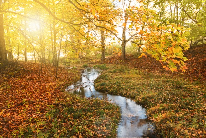 A ribbon stream meanders into golden fall foliage