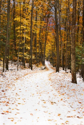 A November snow enhances remaining fall color on a winding Leelanau County country road