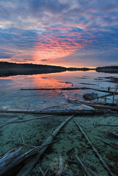 A rosy ray of sunrise forms a spotlight that reflects in the deadfall surrounding Cedar Lake's blue waters