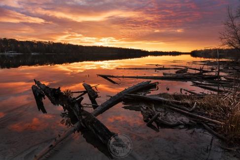 Golden sunlight floods the reflective waters around Cedar Lake's fallen trees
