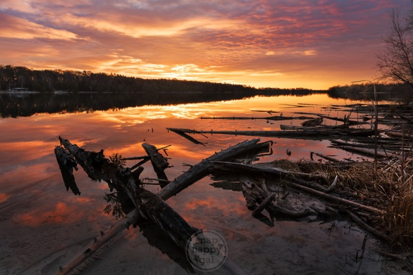 Golden sunlight floods the reflective waters around Cedar Lake's fallen trees