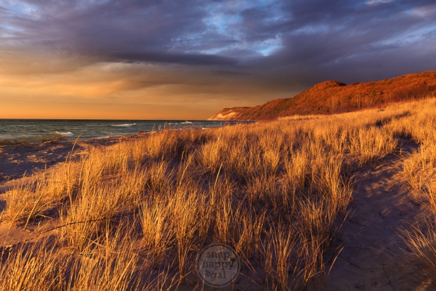 Color Opposites - Warm light and a cool purple sky play amid the dune grass at Esch Beach