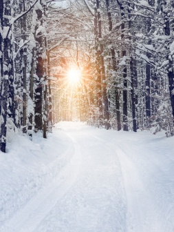 Warm light beams onto a snow covered back road in northern Michigan