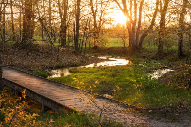 A warm golden sunset through new spring growth in a Leelanau Conservancy tract in Empire, Michigan