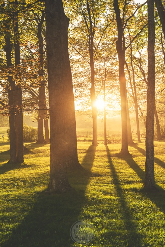Golden light floats through a fog filled woods on the Old Mission Peninsula