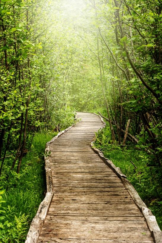 A rustic boardwalk trails through glowing spring green forest growth