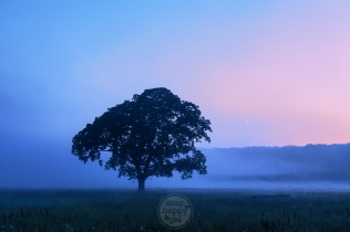 A crescent moon hangs over a silhouetted tree during a foggy sunset in Leelanau County