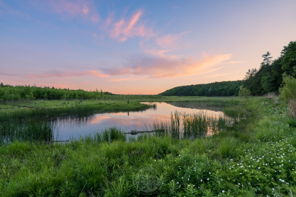 Early summer wildflowers line a still pond with warm sunset reflections
