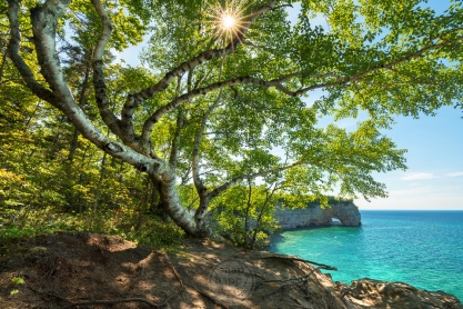 A striking birch tree arcs around Grand Portal Point and Lake Superior in the Pictured Rocks National Lakeshore