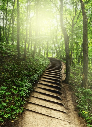 Stairs on the Empire Bluffs trail wind up through a hazy green woods