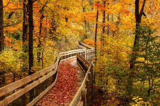 A roadside boardwalk winds through an autumn hued wods