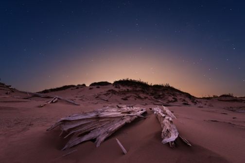 The moon rises under the first stars at a ghost forest in Michigan's Sleeping Bear Dunes