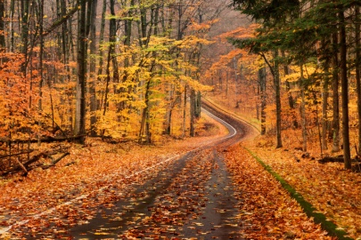 The Pierce Stocking Scenic Drive in Michigan's Sleeping Bear Dunes winds though intense fall color