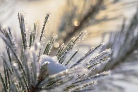 frost-crystals-pine-macro-03192008