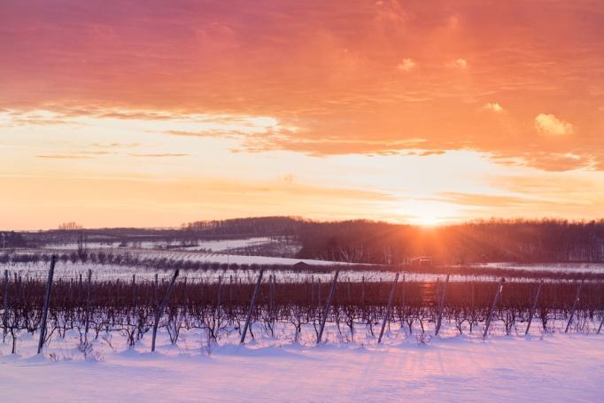 glowing-sunset-michigan-vineyard-winter-01191166
