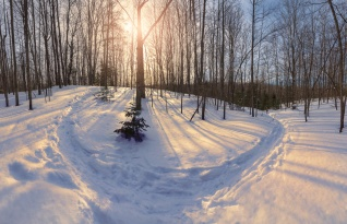 golden-sunset-snowy-hillside-trail-panorama-northern-michigan-trees-02191838