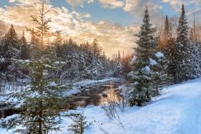snowy-pine-trees-river-winter-sunset-01191157