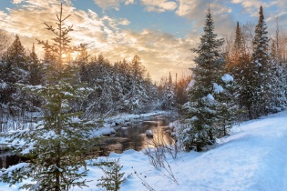 snowy-pine-trees-river-winter-sunset-01191157