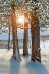sun-through-cedars-winter-landscape-michigan-12180720