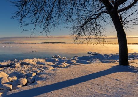 winter-sunrise-tree-silhouette-lake-michigan-traverse-city-01191564