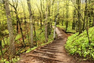 spring-green-woods-stairway-Sleeping-Bear-Dunes-05192696